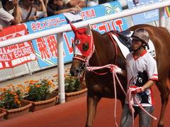 20161002 阪神7R (500) レーヌドブリエ 10