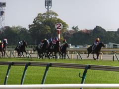 20131117 東京 ビップレボルシオン 17