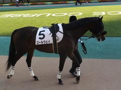 20141025 東京12R ゴールウェイ 08
