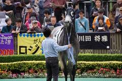 20191124 東京4R 3歳上1勝クラス ロークアルルージュ 12