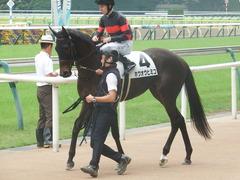 20190608 東京6R 3歳牝馬未勝利 ホウオウヒミコ 16