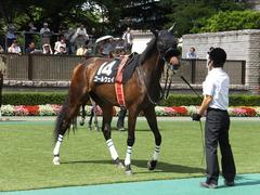 20140629 東京10R ゴールウェイ 09