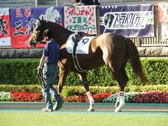 東京12R (1000) メイショウノボサン 09