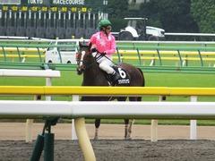 20161008 東京9R 山中湖特別(牝1000) ツクバアスナロ 20