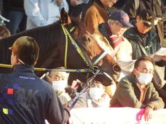 20190113 中山12R (1000) ラッシュアタック 12