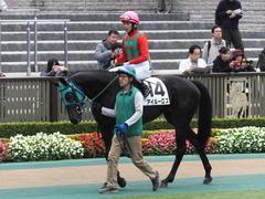 20151123 東京1R 2歳未勝利 アイルーロス 08