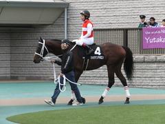 20151031 東京10R 赤富士S ショウナンアポロン 16