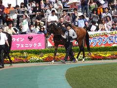 20160501 東京9R 陣馬特別(1000) オウケンブラック 05