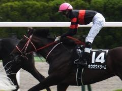 20170624 函館10R 湯川特別(500) ホウオウドリーム 36