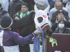 20171126 東京1R 2歳未勝利 サラート 09