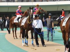 20141026 東京4R ラッシュアタック 12