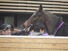 20190323 中山9R ミモザ賞 3歳牝馬(500) トロハ 20