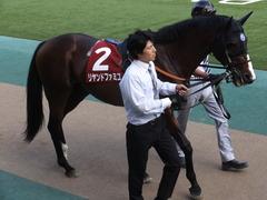 20160529 東京12R 目黒記念(G2) リヤンドファミユ 04