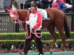 20171118 東京10R ユートピアS(牝1600) レーヌドブリエ 03
