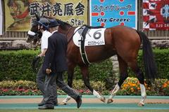 20191103 東京9R 3歳上2勝クラス ロジスカーレット 18