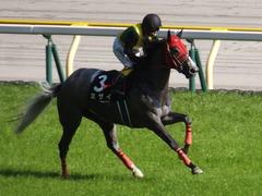 20170430 東京11R スイートピーS 3歳牝馬OP ミザイ 15