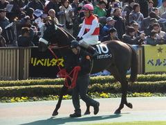 20140223 東京9R ショウナンラグーン 11