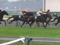 20141012 東京10R レジェンドTC オウケンブラック 12