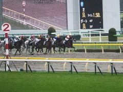 20141108 東京9R ショウナンアポロン 17
