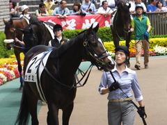 20160514 東京5R 3歳牝馬未勝利 ツボミ 12