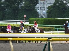 20140622 東京8R ショウナンアポロン 10