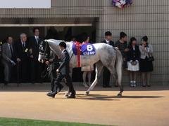 20140504 京都11R 天皇賞春 ゴールドシップ 04