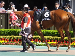 20170429 東京9R 秩父特別(1000) レーヌドブリエ 12