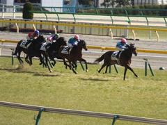 20150221 東京5R 3歳未勝利 トーセンカナロア 13