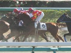 20181228 中山2R 2歳牝馬未勝利 パーフェクトワン 15