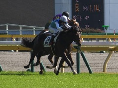 20161105 東京4R 2歳未勝利 アドマイヤシナイ 18