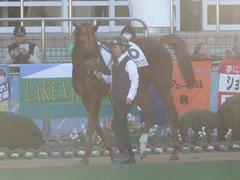 20181228 中山2R 2歳牝馬未勝利 パーフェクトワン 05