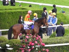 20151122 京都11R MCS(G1) モーリス 13