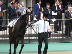 20160605 東京4R 3歳未勝利 ツボミ 14