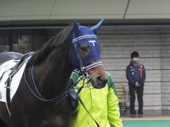 20160130 東京4R 3歳未勝利 アタンドリール 02