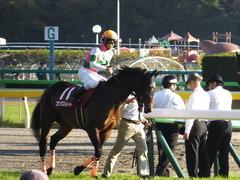 20161105 東京11R 京王杯2歳S(G2) コウソクストレート 23