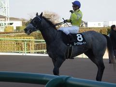 20190113 中山9R 黒竹賞(500) ロークアルルージュ 17
