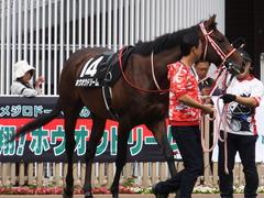 20170624 函館10R 湯川特別(500) ホウオウドリーム 18