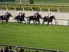 20140511 東京11R NHKマイルカップ(G1)ショウナンアチーヴ15