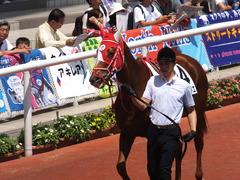 20160618 阪神8R 3歳上牝馬500万下 レーヌドブリエ 12