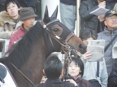 20171216 中山2R 2歳牝馬未勝利 ルフィーナ 10
