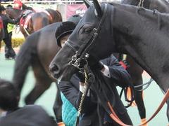 20141206 中京11R 金鯱賞(G2) サトノノブレス 10