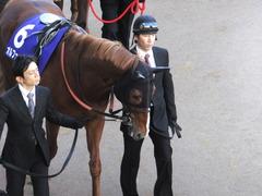 20131222 有馬記念 オルフェーブル 03