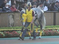 20131116 東京 メジロツボネ03