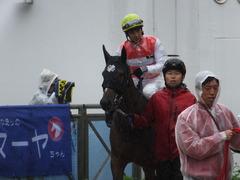 20170917 中山5R 2歳牝馬メイクデビュー ショウナンアーデン 10