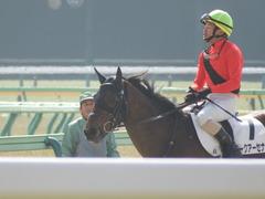 20180217 東京4R 4歳上障害未勝利 アークアーセナル 18