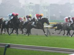 20141012 東京10R レジェンドTC オウケンブラック 11