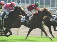20181006 東京3R 2歳未勝利 ヤップヤップヤップ 18