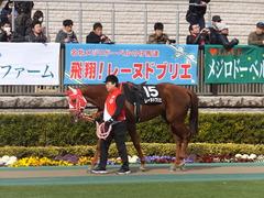 20170211 東京9R テレビ山梨杯(牝1000) レーヌドブリエ 04
