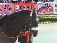 20140223 東京9R ショウナンラグーン 06