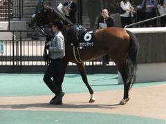 20160501 東京9R 陣馬特別(1000) オウケンブラック 08